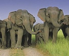 ELEPHANT TOUR OF EAST INDIA